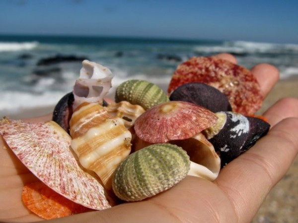 Jeffreis Bay shells